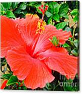 Tropical Explosion Canvas Print
