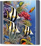 Tropical Fish A Canvas Print