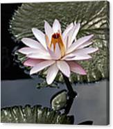 Tropical Floral Elegance Canvas Print