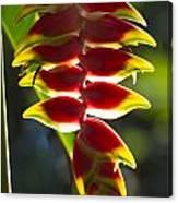 Tropical Flower 1 Canvas Print