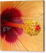 Tropical Hibiscus - Aruba Wind 01 Canvas Print
