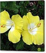 Tropical Hibiscus - Bonaire Wind 01 Canvas Print