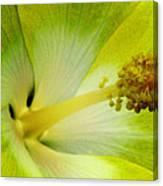 Tropical Hibiscus - Bonaire Wind 06a Canvas Print