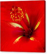 Tropical Hibiscus - Starry Wind 02a Canvas Print