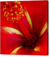 Tropical Hibiscus - Starry Wind 03a Canvas Print