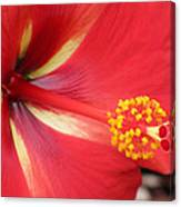 Tropical Hibiscus - Starry Wind 04 Canvas Print