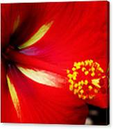 Tropical Hibiscus - Starry Wind 04a Canvas Print