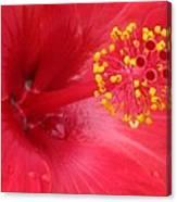 Tropical Hibiscus - Trinidad Wind 02 Canvas Print