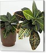Tropical Houseplant Canvas Print