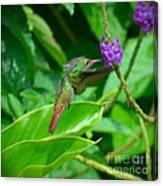 Tropical Hummingbird Canvas Print