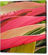 Tropical Leaves Abstract 3 Canvas Print
