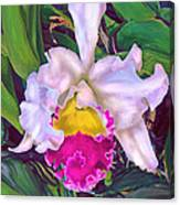 Tropical Orchid Canvas Print