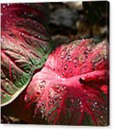 Tropical Rain - Botanical Art By Sharon Cummings Canvas Print
