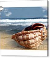 Tropical Shell 2 Canvas Print