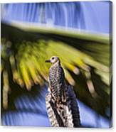 Tropical Woodpecker Canvas Print