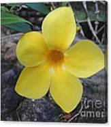Tropical Yellow Flower Canvas Print