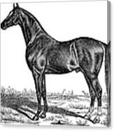 Trotting Horse Engraving Canvas Print