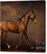 Trotting Into The Night Canvas Print