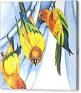 Trouble - Sun Conure Trio Canvas Print