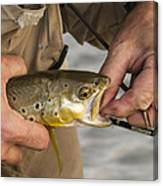 Trout Dentistry Canvas Print