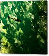 Trout In Emerald Canvas Print