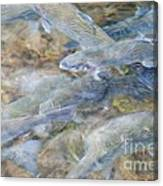Trout Pond Abstract Canvas Print