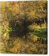 Trout Run Creek Fall 2 Canvas Print