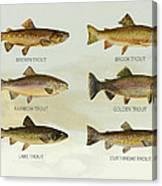 Trout Species Canvas Print