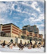 Truckee Ducks Canvas Print