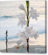 White Trumpet-shaped Flowers At Dana Point Beach California  Canvas Print