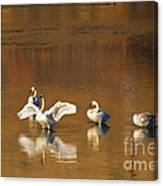Trumpeter Ballet Canvas Print