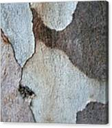 Trunk Of A Eucalyptus Tree  Canvas Print