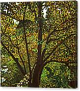 Trunk Of Life Canvas Print