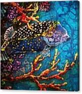 Trunkfish - Male Canvas Print