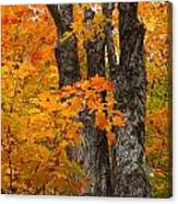 Trunks In Orange Canvas Print