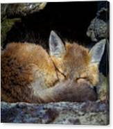 Fox Kit - Trust Canvas Print