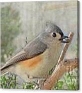 Tuffted Titmouse Early Spring Canvas Print