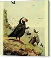 Tufted Puffin Circa 1913 Canvas Print