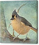 Tufted Titmouse IIi Canvas Print