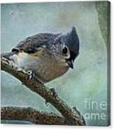 Tufted Titmouse With Snowflake Decorations Canvas Print