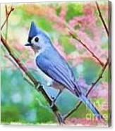 Tufted Titmouse With Spring Booms - Digital Paint II Canvas Print