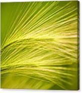 Tufts Of Ornamental Grass Canvas Print