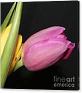 Tulip 2 Canvas Print