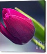 Tulip 2a Canvas Print
