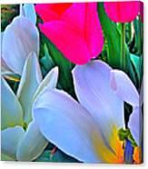 Tulip 35 Canvas Print