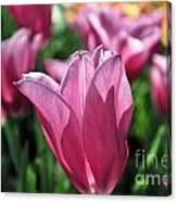 Tulip Angel Canvas Print