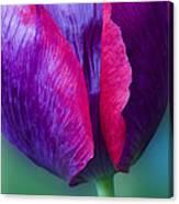 Tulip Bright  Canvas Print