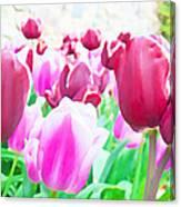 Tulip Delight Canvas Print