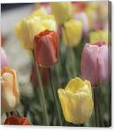 Tulip Display Canvas Print