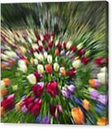 Tulip Explosion Canvas Print